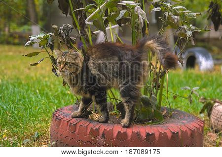 Domestic dirt cat with amazing look portrait