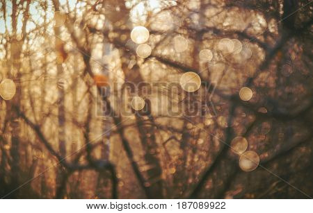 Warm yellow golden color tone blurred nature background of a view orange foliage of a tree against the sky facing sun flare and bokeh