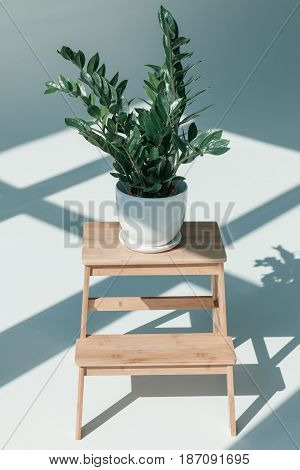 Potted Plant In White Vase On Flower Stand At Empty Room