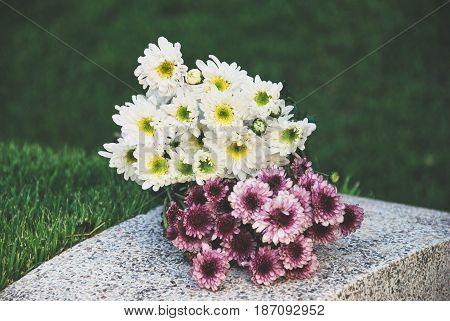 Chrysanthemum, Dendranthemum Grandifflora