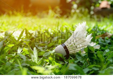 Shuttlecock on the green grass with sun bright