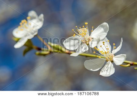 Beatiful blooming full spring season. Shot made against soft and natural background