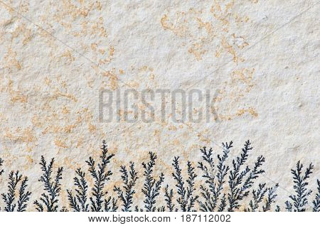 Stone With Fossilized Algae, Color Image, Texture, Background,