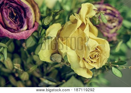 Bouquet of the withered rose flowers close-up