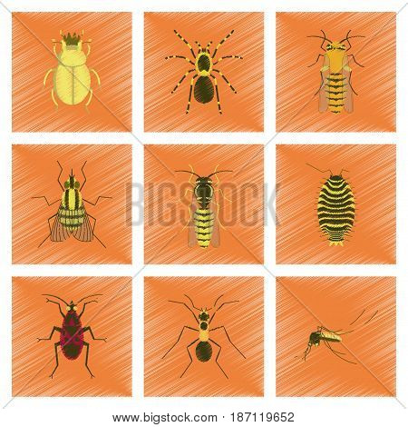 assembly flat shading style illustration of insect honey wasp soldier bug ant mosquito scarab Araneus bee fly