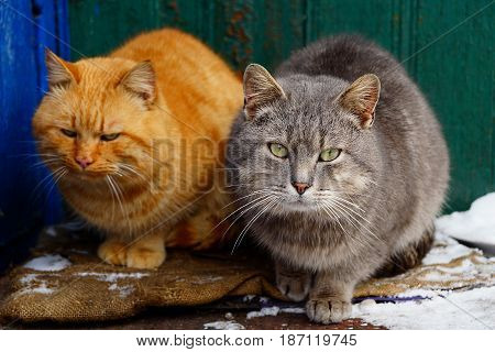 Two cats sit on the threshold near the house