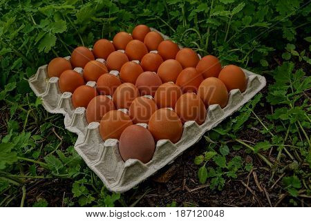 Set of chicken eggs in a tray on green plants