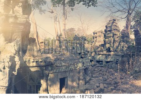 Jungle tree covering the stones of the temple in Angkor Wat (Siem Reap Cambodia) Toning