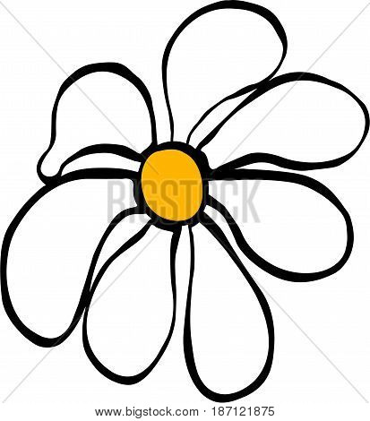 camomile yellow and white flower medicinal beautiful