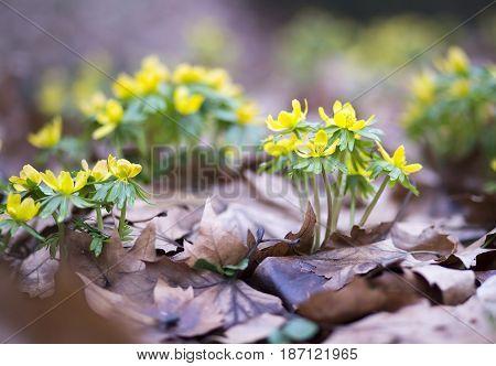 Beautiful spring flowers - springtime concept background