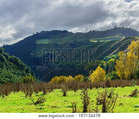 Panoramic beautiful scenery of Whanganui river road in National Park in Autumn Whanganui North Island of New Zealand
