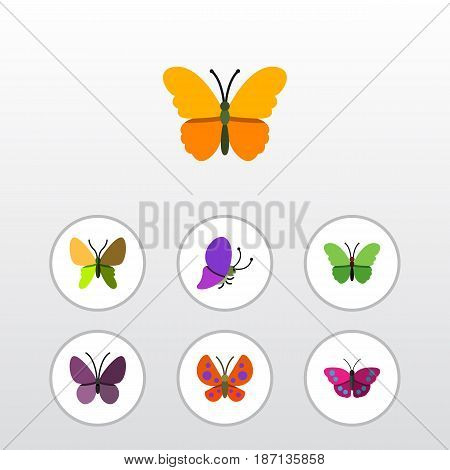 Flat Monarch Set Of Summer Insect, Violet Wing, Milkweed And Other Vector Objects. Also Includes Moth, Summer, Archippus Elements.