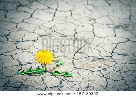Small tree breaks through the pavement. Green sprout of a plant makes the way through a crack asphalt. Concept: don't give up no matter what nothing is impossible. Health medicine cosmetic.