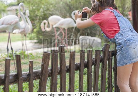 Little girl getting close to the flamingoes enclosure. He is climbing by fence and taking picture with mobile phone