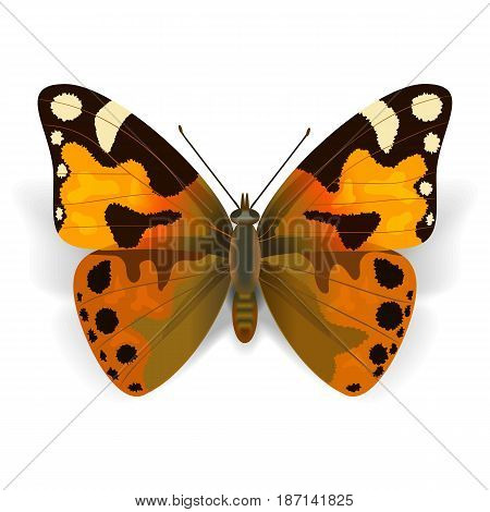 Vector Orange Butterfly isolated on white background