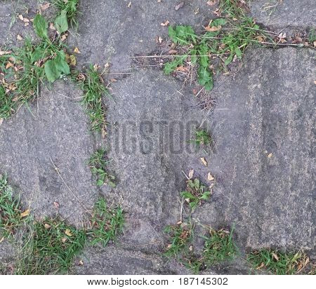 Grass growing between the rough stones paving, nature power theme. Aged rocky road, closeup view. Natural background.