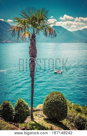 View of summer landscape with palm and lake Como lake Italy.