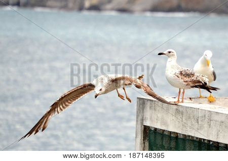Flying gulls on an abandoned terrace in the background of the sea