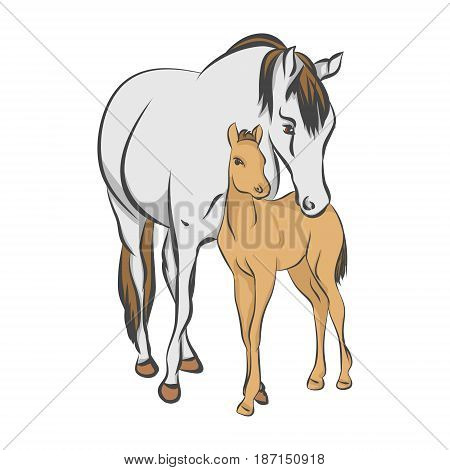The grey horse and her foal on a white background vector illustration