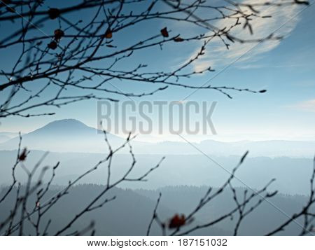 View Through Branches Over Deep Misty Valley Within Daybreak. Foggy And Misty Morning