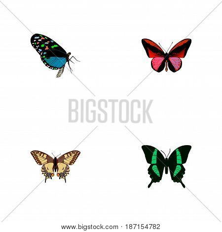 Realistic Hairstreak, Tiger Swallowtail, Beauty Fly And Other Vector Elements. Set Of Beauty Realistic Symbols Also Includes Fly, Tiger, Tropical Objects.