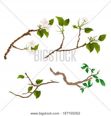 Branch various Sprigs twig apple tree and bush vintage hand draw vector illustration
