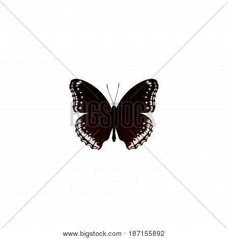 Realistic Hypolimnas Element. Vector Illustration Of Realistic Spicebush Isolated On Clean Background. Can Be Used As Hypolimnas, Black And Butterfly Symbols.