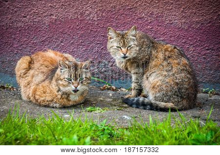two stray cat outside sitting on pavement