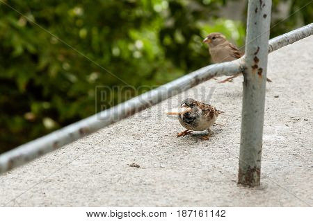 A Sparrow Holds A Cookie In Its Beak