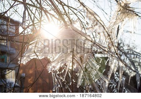 Icicles on the branches of tree in sun rays.