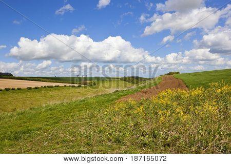 Springtime Valley With Wildflowers