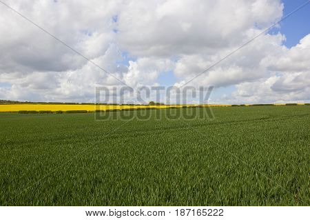 Oilseed Rape And Wheat Crops