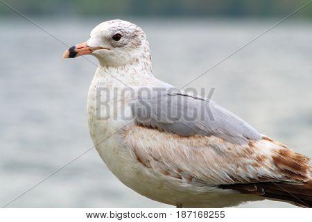 seagull bird portrait sky ocean lake feather at the beach