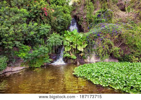 Small waterfall in the picturesque jungle