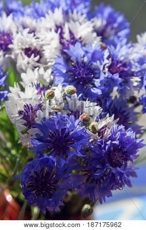 bouquet of vivid flower cornflower