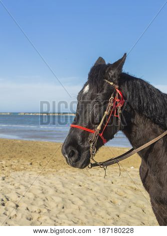 brown horse head against blue sky near the sea
