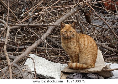 Homeless, Orange Stray Cat Seating In An Abandoned Backyard