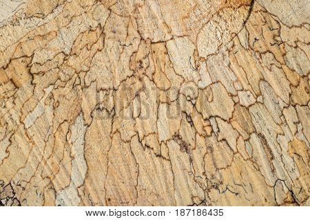 Texture Tree Rings And Saw Cut Of Fresh Sawn Tree Trunk