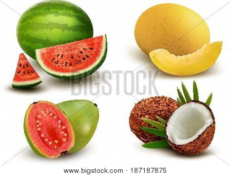 Collection of fruit and berries. Watermelon honeydew guava coconut. Vector Set.