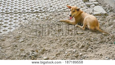 Image of a stray brown dog outdoors.