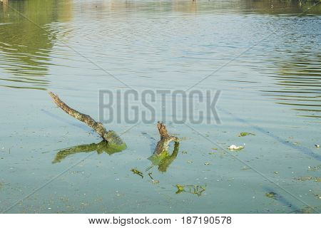 water surface of pond at royal tank in Hauzkhas village New Delhi India