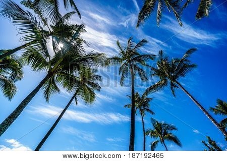 Sun in a blue sky shining through the palm branches of the palm trees on the tropical island of Oahu in island state Hawaii in the Pacific Ocean