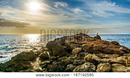 Sunset over the horizon with a heron sitting on the rocky shores Paradise Cove on the west coast of the tropical Hawaiian island of Oahu