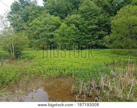 muddy water grasses and trees in muddy marsh