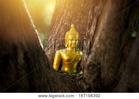 Small Buddha Statue Gold Color Bright Inside The Wood Tree.