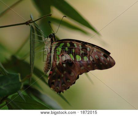 Butterfly Green 2 Copy