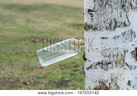 Collection of birch sap in spring, glass jar