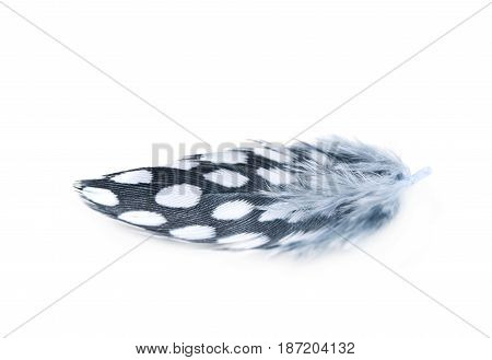 Decorational bird's feather isolated over the white background