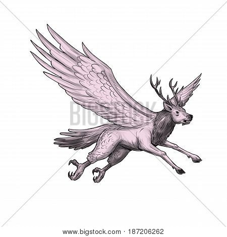 Tattoo style illustration of a Peryton a Medieval European mythical creature with head forelegs and antlers of a full-grown stag with the wings plumage and hindquarters of a bird viewed from the side set on isolated white background.