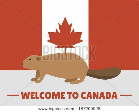 Brown beaver animal character mammal on canada red white flag background canadian vector illustration. Wild fur teeth drawing castor patriotic nationality symbol.